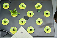 AeroGarden Farm 3 Left. at 10 days. Broccoli, Swiss Chard, Basil, Dill, Parsley. Image taken with a Leica TL-2 camera and 35 mm f/1.4 lens.