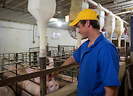 Ben Dittmer greets a pig in a gestation building at Grandview Farms in Eldridge, Iowa on Thursday August 9, 2012.