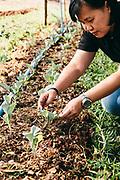 Owner Neeracha Wongmasa works in the organic garden at Phunacome resort