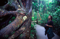 A woman looks at a giant fig tree in the heart of the Daintree National Park.