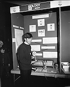 1972.07/01/1972.01/07/1972.7th January 1972.The Aer lingus Young Scientist Exhibition at the RDS, Dublin..Sean Mac Fheorais from Colaiste Mhuire, Cearnog Pharnell, Dublin with his winning exhibit 'Grinn-staidear ar pterostigmata'.
