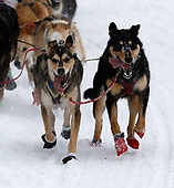 Mar 3, 2018-News-Idiarod Trail Sled Dog Race-Ceremonial Start