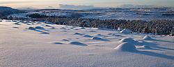 Snow covered trees and moss in Heidmork, Iceland - snjór og tré í Heiðmörk á fallegum vetrardegi