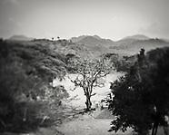 Trees of Copan