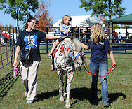 WARRINGTON, PA - SEPTEMBER 27: Tara Brouda (L) of Chalfont, Pennsylvania and Sam Kirka of Hellertown, Pennsylvania walk alongside Naomi Brouda, 3, as she rides a pony during Warrington Community Day September 27, 2014 at John Paul Park at Lower Nike in Warrington, Pennsylvania. (Photo by William Thomas Cain/Cain Images)