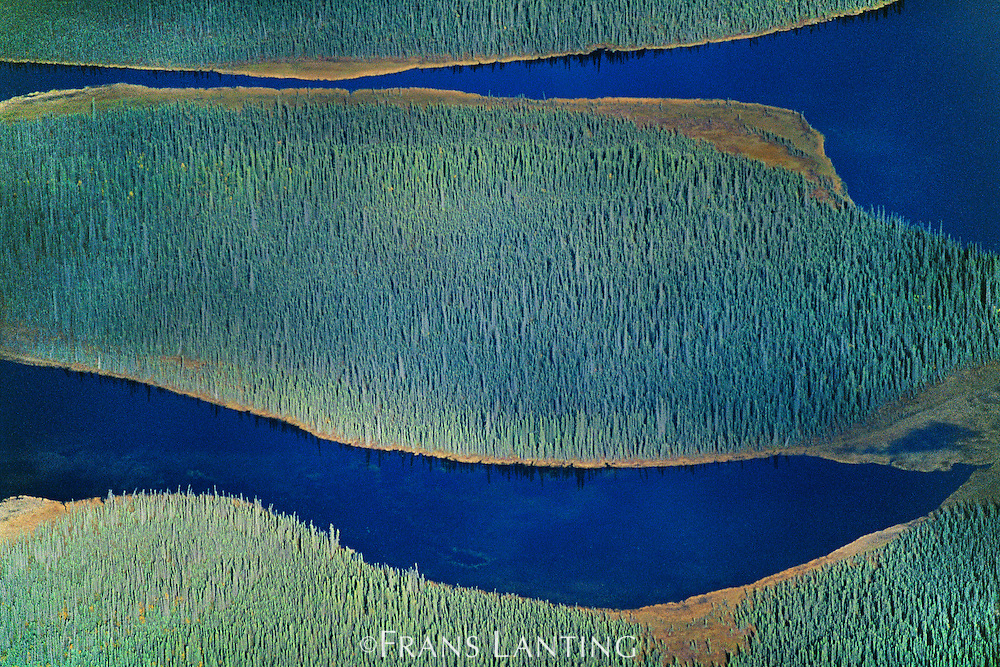 Boreal forest (aerial), Chitina Valley, Wrangell-St. Elias National Park, Alaska