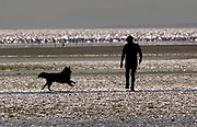 Silhouette of man walking dog on beach