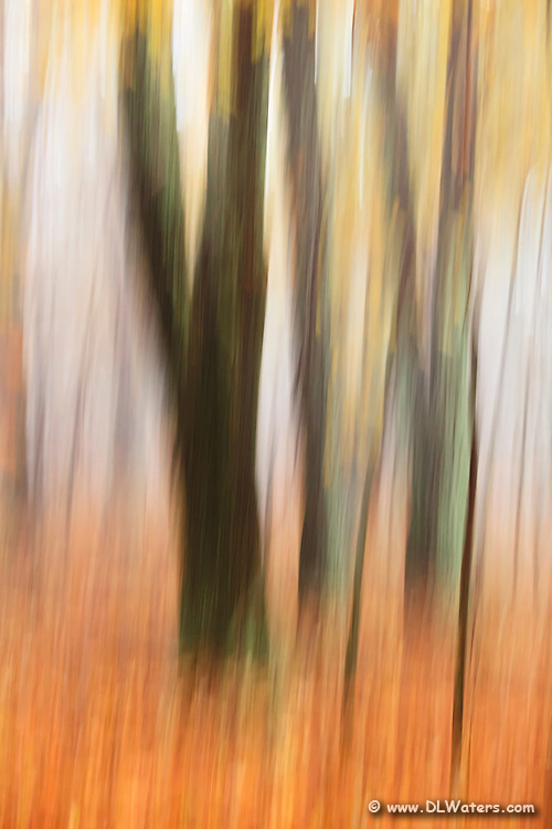 Moving the camera while the shutter was open created this impressionistic fall scene.