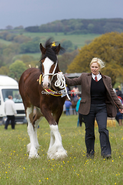 Mrs Andrea Walsh and her 1 year old bay filly Nangreaves Duchess of Buckhurst<br /> s Moorfield Edward