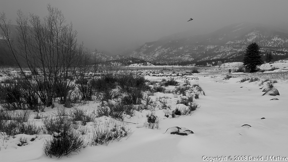 Magpie in Flight with a Winter Storm Approaching. Moraine Park in Rocky Mountain National Park. Image taken with a Nikon D2xs camera and 17-35 mm f/2.8 lens (ISO 100, 25 mm, f/9, 1/125 sec).