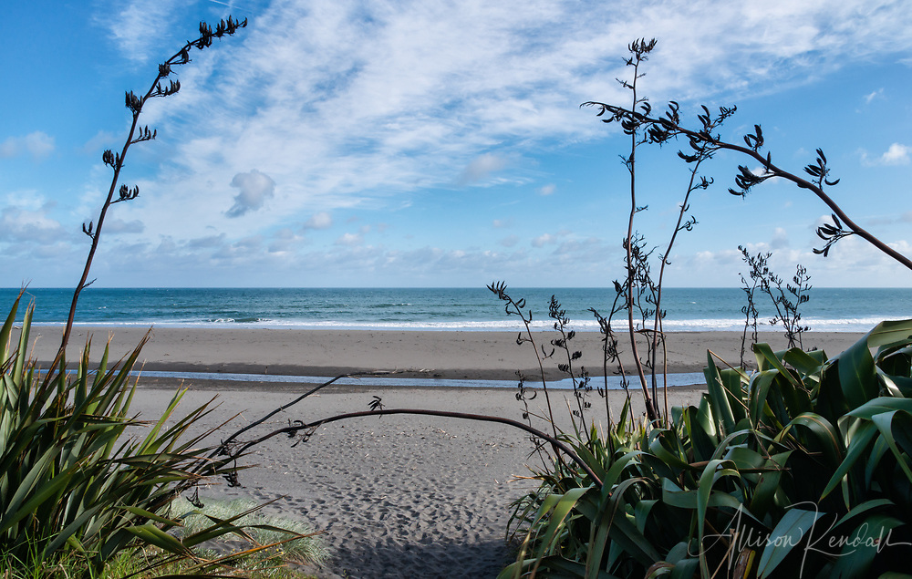 Black sands of Oakura Beach, New Zealand