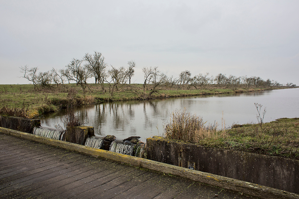 """Oostverdesplassen nature reserve, is a wilderness that was constructed from reclaimed land. The reserve occupies fourteen thousand perfectly flat acres on the shore or the inlet turned lake. This area was originally designated for industry; however while it was still in the process of drying out, a handful of bioligist convinced the Dutch government that theland would be better used to recreate a paleolithic landscape. The biologist set aboutstocking the Oostverdesplassen with the sorts of animals that would have inhabited the region since prehistoric times had it not been underwater. For example, Heck cattle, were used in place by the extinct aurochs, these are cattle of a variety specially bred by Nazi scientists. The cattle grazed and multiplied, so did the red deer, the wild horses, the egrets, the geese and foxes. All were brought in from other countries. These mammals reproduced so prolifically that the German magazine Der Spiegel dubbed the Oostvaardesplassen """"the Serengeti behind the dikes."""" Flevoland, Netherlands."""