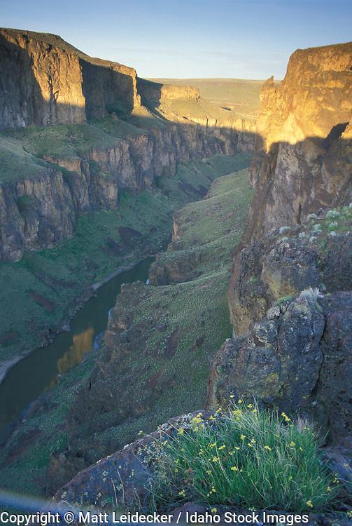 Idaho, Owyhee, Canyonlands.  Canyon scenic rim shot at sunrise.