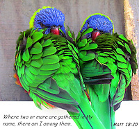 """Where two or more are gathered birds image for sale, """"Where two or more are gathered there i am among them. Matt 18:20."""""""