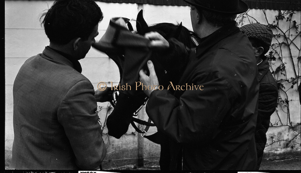 """Vincent O'Brien with 'Sir Ivor' at O'Brien Stables, Cashel. """"Sir Ivor' was owned by American businessman and U.S. Ambassador to Ireland, Raymond R. Guest. The horse was named for his British grandfather, Sir Ivor Guest, 1st Baron Wimborne.' Sir Ivor' won three races in 1967, the Grand Criterium at Longchamp and the National Stables and the Probationers State at the Curragh. <br /> 11.03.1968"""