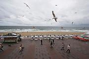 Strandkörbe and seagulls at the Kurpromenade.