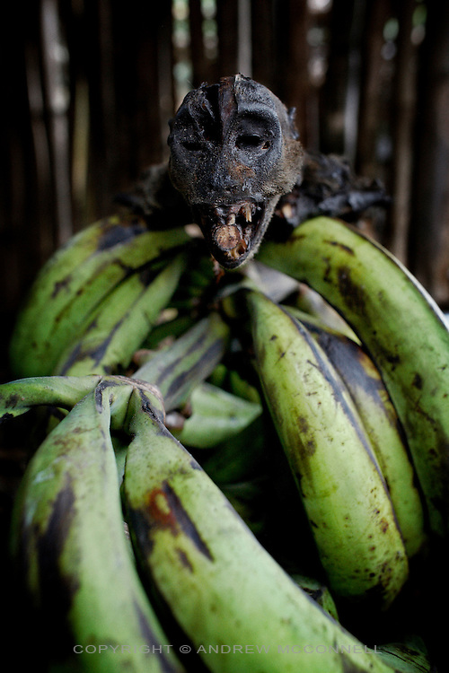 A smoked monkey sits on top of a plantain bunch in Yamgambi market, DR Congo, on Monday, Dec, 8, 2008. Bushmeat is popular in Congo and an important source of protein which many lack in their diet, but, it is expensive and usually beyond the means of most.