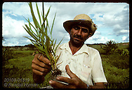 Ranch foreman examines grass grown in Amazon pasture for cattle near Eirunepe, Amazonas. Brazil