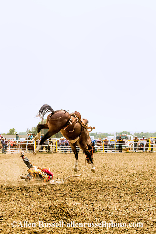 Saddle Bronc, Crow Fair Rodeo, Crow Indian Reservation, Montana, Austin Monroy bucked off