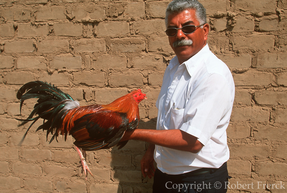 PERU, NORTH COAST, LIFESTYLE man carrying a cock to cockfight south of Chiclayo