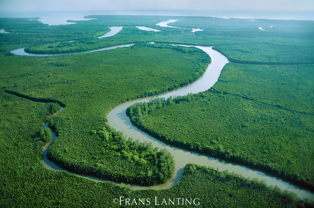 River channels in mangrove forest (aerial), Sabah, Borneo
