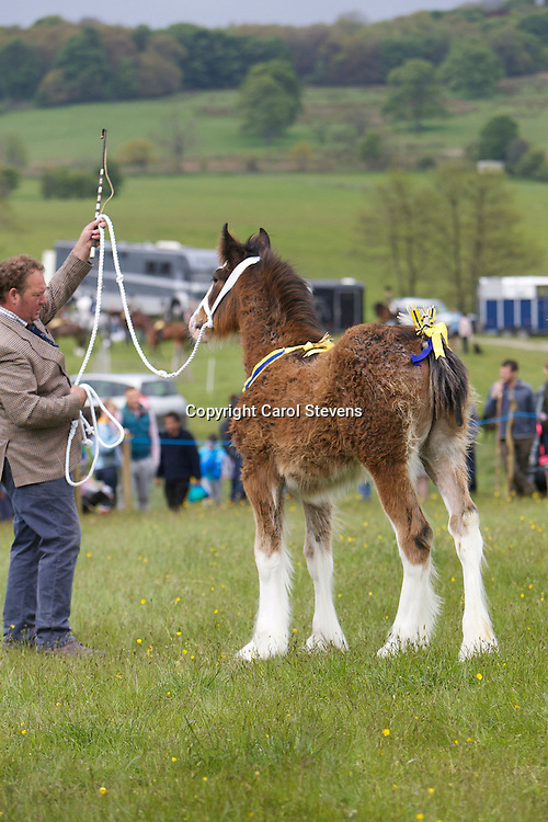 Mr P Woof's Marieth Michaela (Sire - Red Brae Mascot), Champion Foal