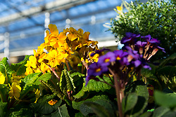 Spring at Almondsbury Garden Centre after the completion of extensive renovations - Rogan Thomson/JMP - 25/03/2017 - PR - Almondsbury Garden Centre - Bristol, England.