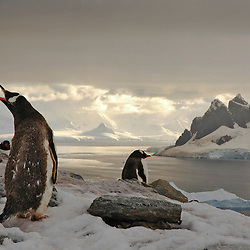 Penguins call in Paradise Bay, Antarctica