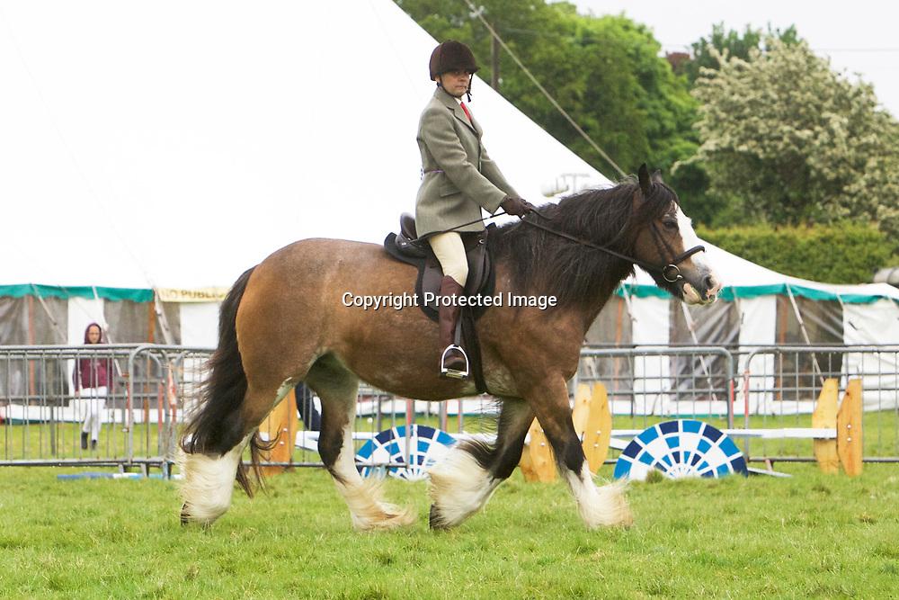 Beatrix ridden by Sean Fritton