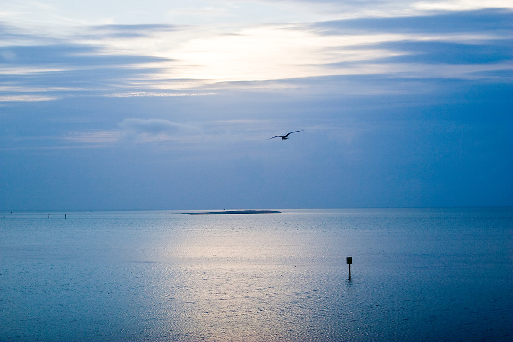 A bright blue sky and ocean experience the earliest moments of sunrise as a crane flies above the sea.