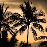 Palm trees with dusk sky