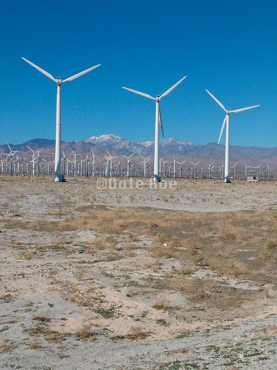 Field of windmills California USA.