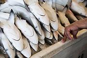 Deira. Shindagha Market. Fish Souq. Sharks.