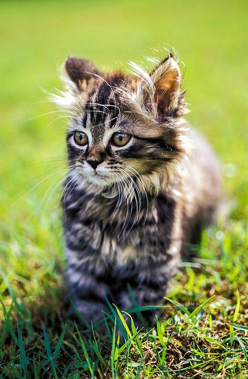 Cute little kitten in yard