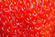 France, fraise, détail