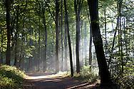 Europa, Deutschland, Nordrhein-Westfalen, Herbst im Wald am Ruhrhoehenweg im Ardeygebirge bei Witten...Europe, Germany, North Rhine-Westphalia, autumn in a forest at the Ruhrhoehenweg in the Ardey mountains near Witten.