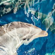 Hauraki Gulf Dolphins