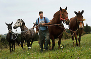 Donn Hewes leads his work horses back toward the stables from the pasture at The Northland Sheep Dairy Farm in Marathon, N.Y., Wednesday, September 10, 2014.<br /> (AP Photo/Heather Ainsworth)