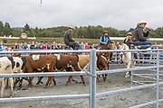 Ranch sorting, oppvisning i sortering av storfe med ryttere, ranch sorting er en stor hestesport i USA, visstnok med ca. 400.000 utøvere, ble det sagt på Agrisjå. De som konkurrerte på landbruksmessen i Stjørdal kom fra ulike deler av landet, som Østerdalen, Molde og Finnmark.