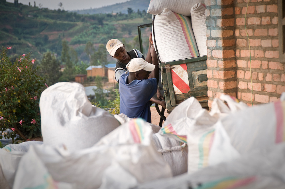 Workers offload the day's coffee cherries  from a truck for farmers who live too far to bring their cherries by hand. Nyarusiza Coffee Washing Station in southern Rwanda.