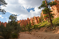Scenic Views, Bryce Canyon National Park, located Utah, in the Southwestern United States.