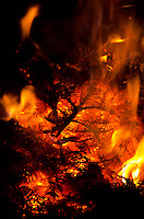 Burning Christmas trees in a Candlemas bonfire, Bar Harbor, Maine.