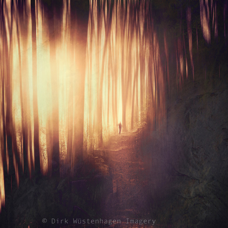 Abstract forest scenery in backlight<br />