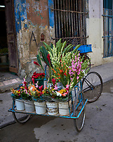 Flower Vendor Cart. Morning Walkabout in Old Havana. Image taken with a Leica T camera and 23 mm f/2 camera.