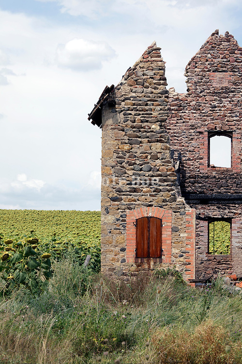 detail of a little ruined house on the edge of a sunflower field