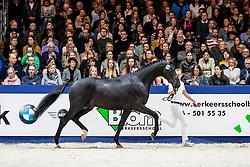 316, Legend<br /> KWPN Hengstenkeuring - 's Hertogenbosch 2019<br /> © Hippo Foto - Dirk Caremans<br /> 01/02/2019