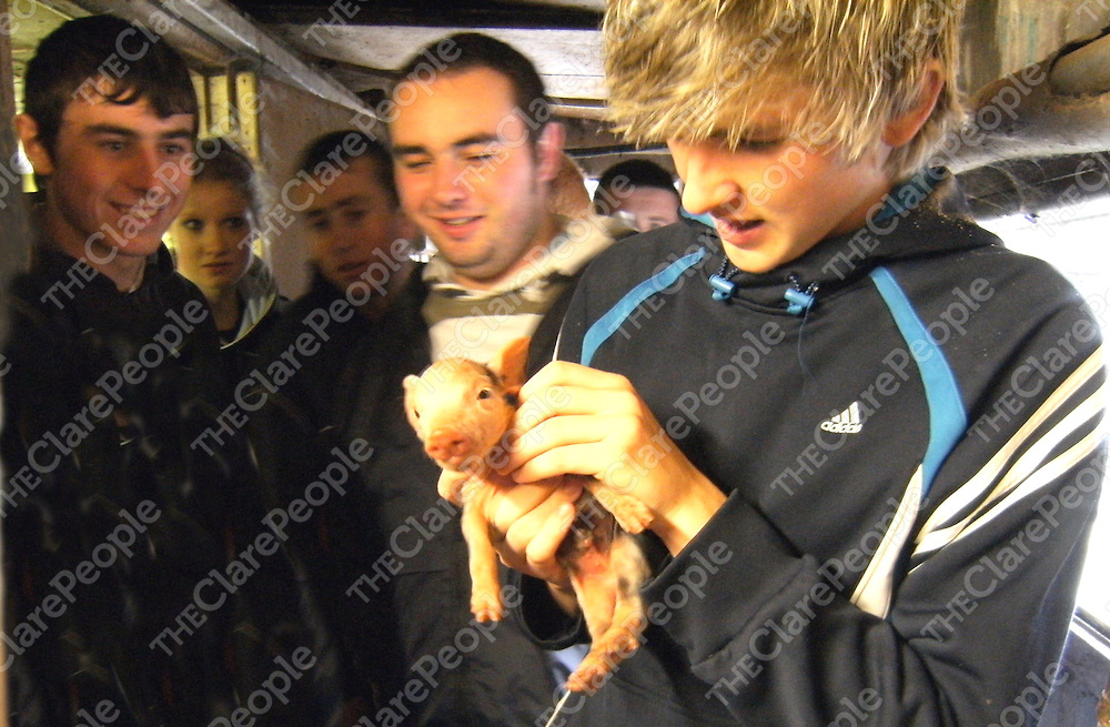 Photo taken during a recent visit by Kilkee Community College Leaving Cert Agricultural Science Students to Gilteze Ltd an integrated piggery in Knockanean, Ennis where owner Mr Colm McGrath introduced the students to some of his 5,000 animals. Photo shows Tom Downes, Leaving Cert student at Kilkee Community College, greeting a new arrival! Other students in the photo _ Vincent Considine, Sharon Haugh, Martin Hanrahan & Mark Magner