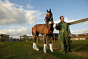 Dr. Dean Richardson, Chief of Surgery at the University of Pennsylvania?s George D. Widener Hospital in Kennett Square, Pa. walks Barbaro in a paddock outside his hospital stable, Friday September 29, 2006, in Kennett Square, Pa. (Photograph by Jim Graham)