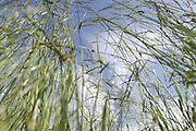 Gräser auf der Weide des Resthof von Barbara Lammert und Florian Liedl in Fresendorf