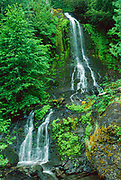 Falls Creek Falls in Summer